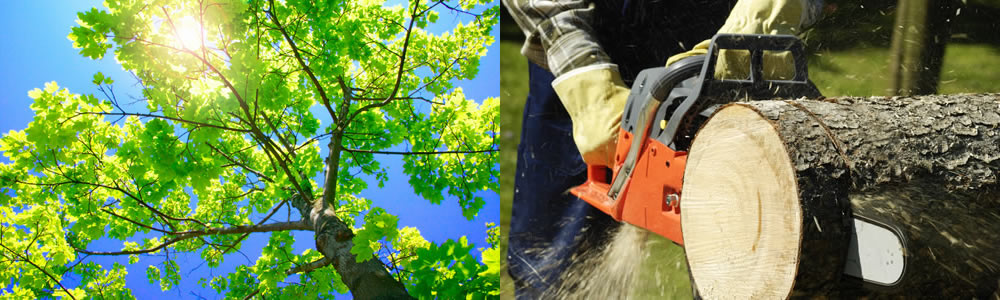 Tree Services Dover